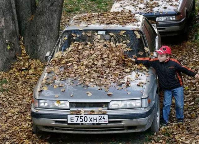落叶不清扫会腐蚀车漆